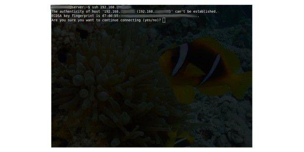 Verbindungs-Test: OpenSSH läuft und Port 22 istoffen.