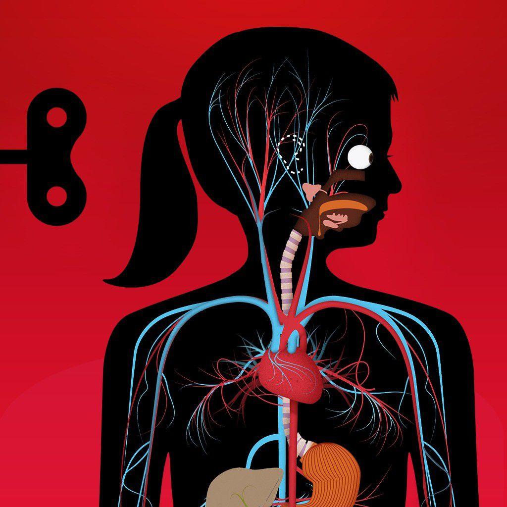 Anatomie Menschlicher Körper Innere Organe Der Frau Von Vorn ...