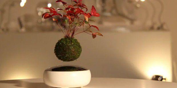 air bonsai kickstarter f r schwebende bonsai b ume pc welt. Black Bedroom Furniture Sets. Home Design Ideas