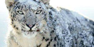 Apple aktualisiert Snow Leopard für den App Store